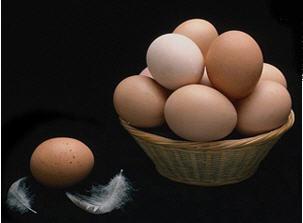 Comprar Huevos de gallina
