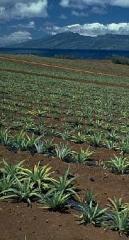 Jardín pulverizador Agro-Lhaura