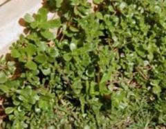 Las malas hierbas de desguace