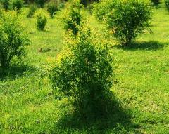 Protección de las plantas Limok