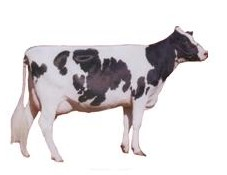 Semen de bovinos