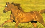 Los piensos para caballos